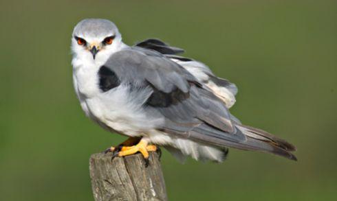 Image result for portugal bird Birdwatching Birdwatching faisca